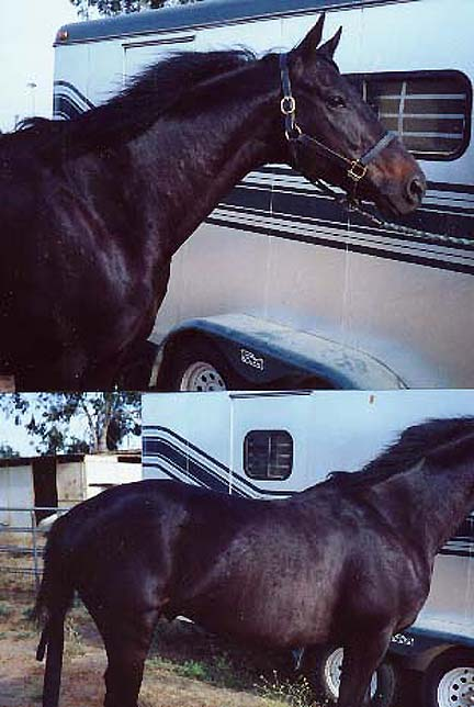 Equine Case Histories   Horse Hives